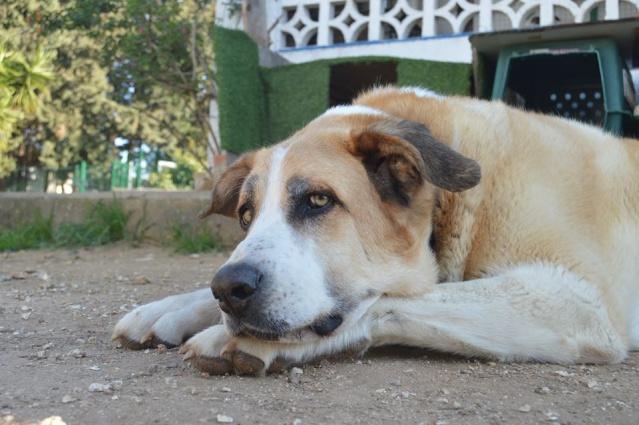 Canis Thor(Gedeeltelijke adoptie) 12800111