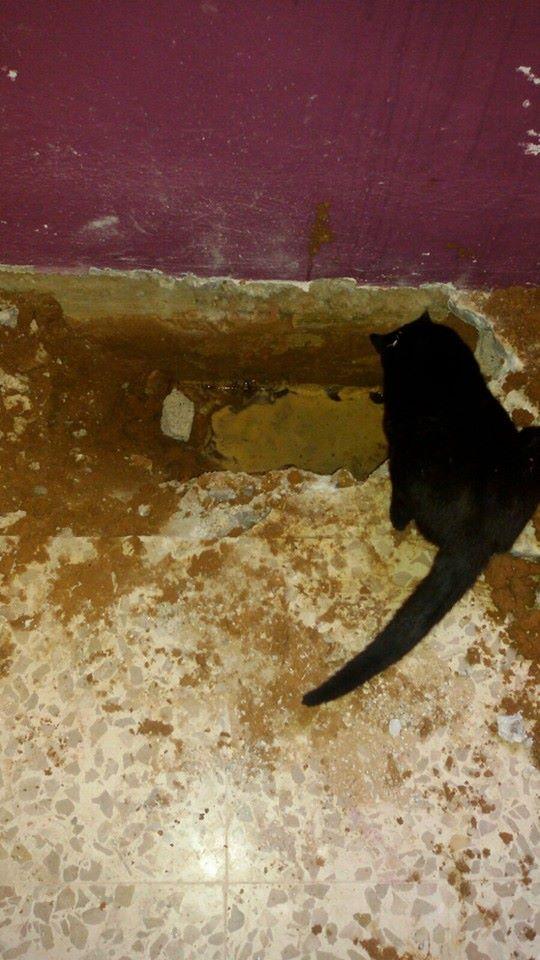 17 maart - 140 euro voor canis y felis ( waterleiding) 12803110