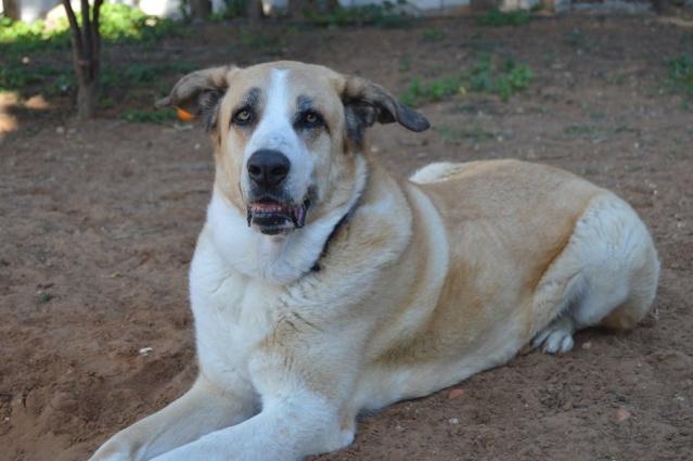 Canis Thor(Gedeeltelijke adoptie) 13859610