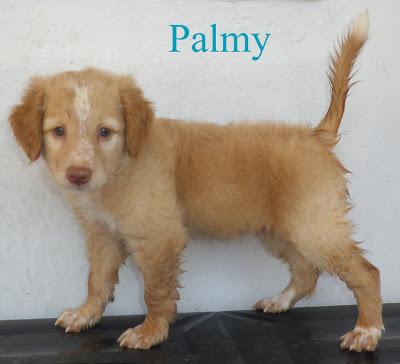 AU - Palmy Palmy10