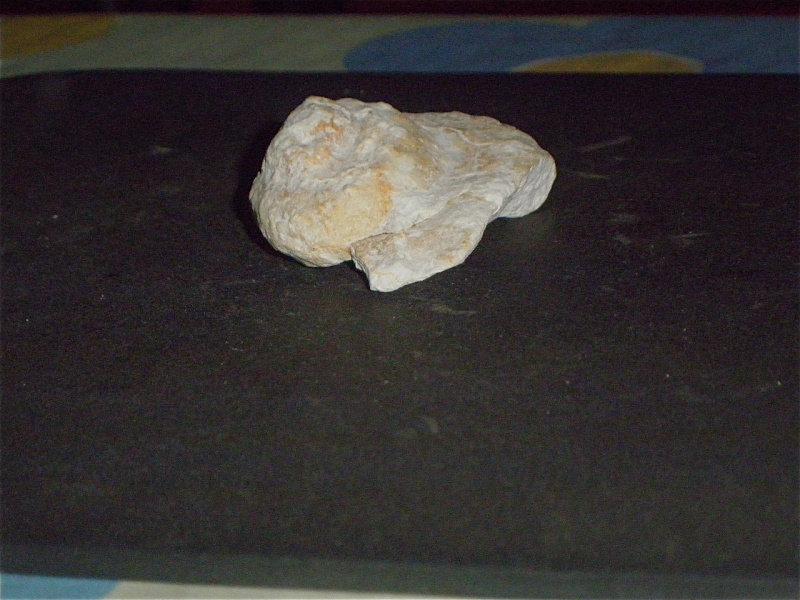 Huîtres et microfossiles charentais  P3231910
