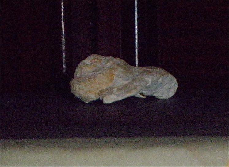 Huîtres et microfossiles charentais  P3231912