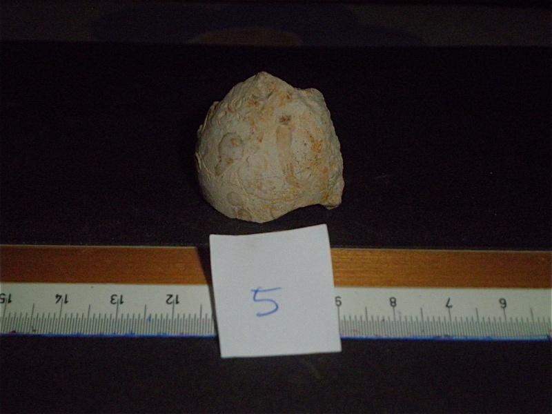 Huîtres et microfossiles charentais  P3231913