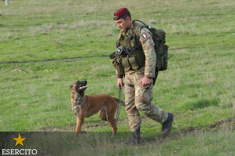 Animaux soldats - Page 6 1347