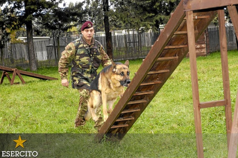 Animaux soldats - Page 6 1431