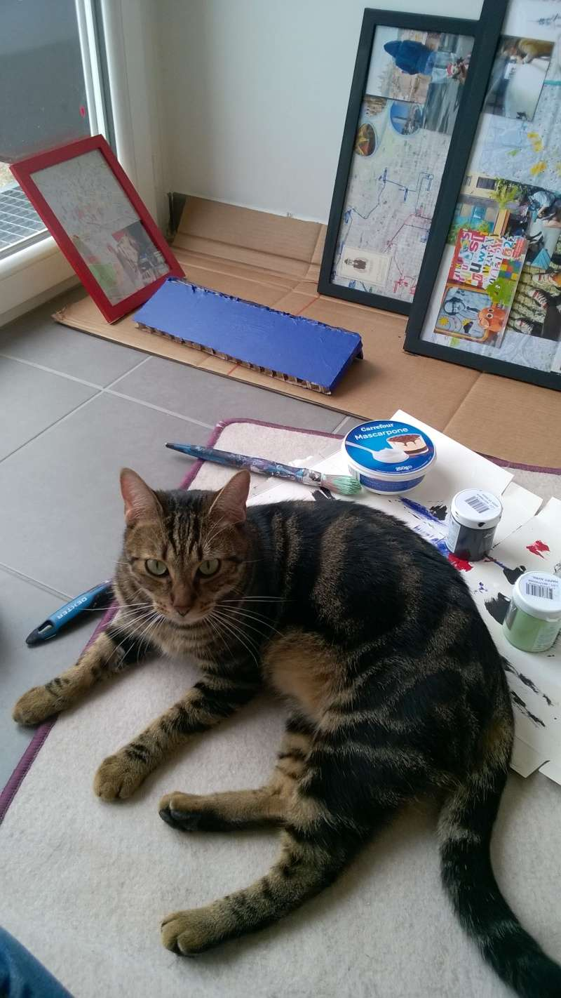 Perdu chat tigré à l'Isle Jourdain Wp_20113
