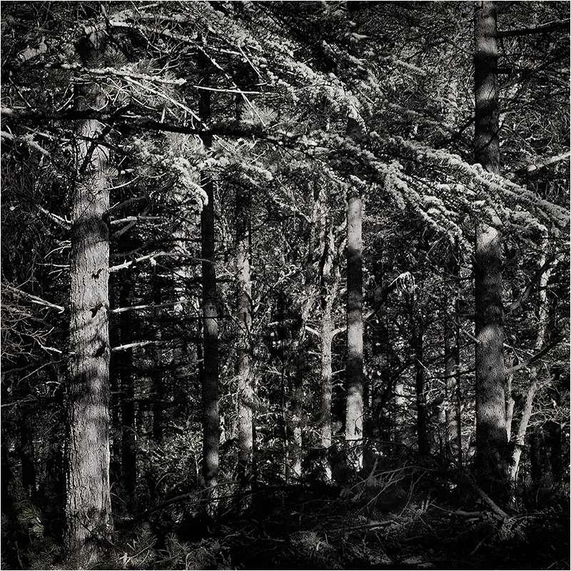 """"""" noir, gris, et presque blanc""""... 60_20511"""