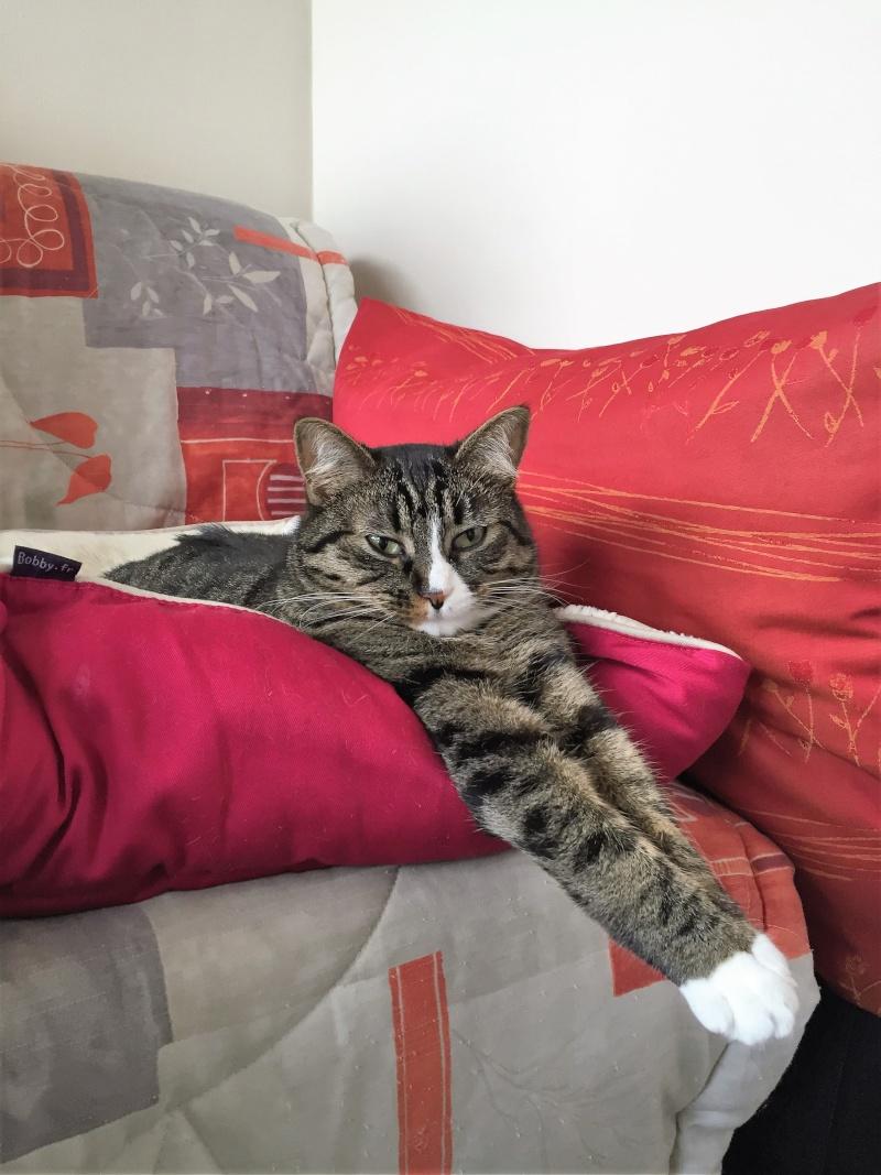 josette - Josette, chatonne tigrée type européen, née en juin 2014 Img_0910