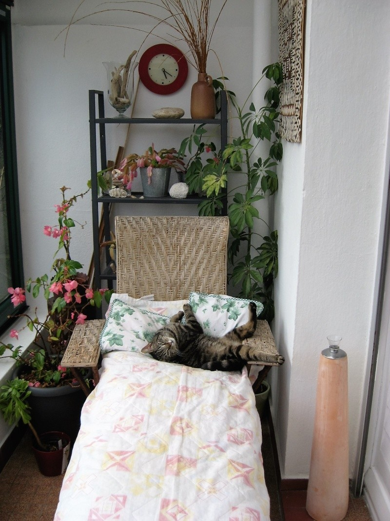 INAWA, chatte européenne tigrée, né en 2013 Pistac10