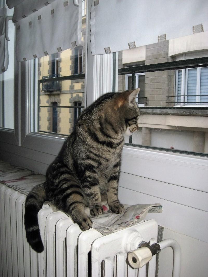 INAWA, chatte européenne tigrée, né en 2013 Pistac11