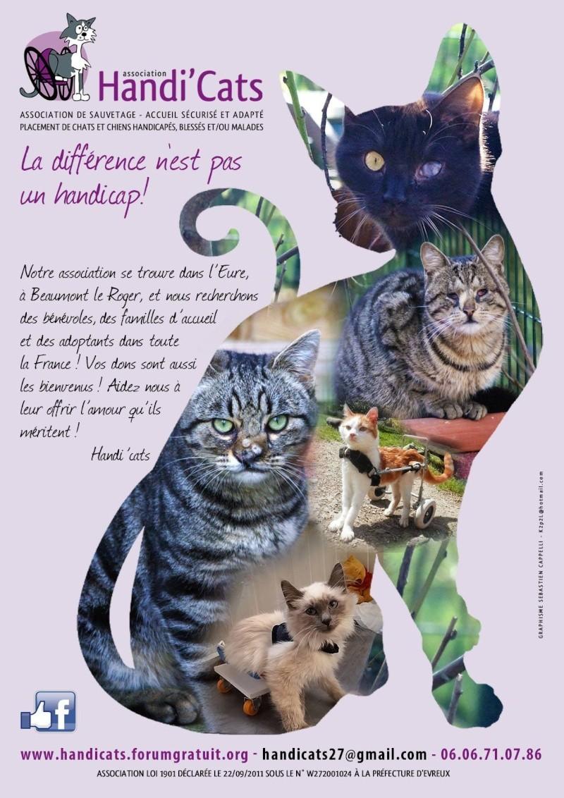 Affiche Handi'cats 12772911