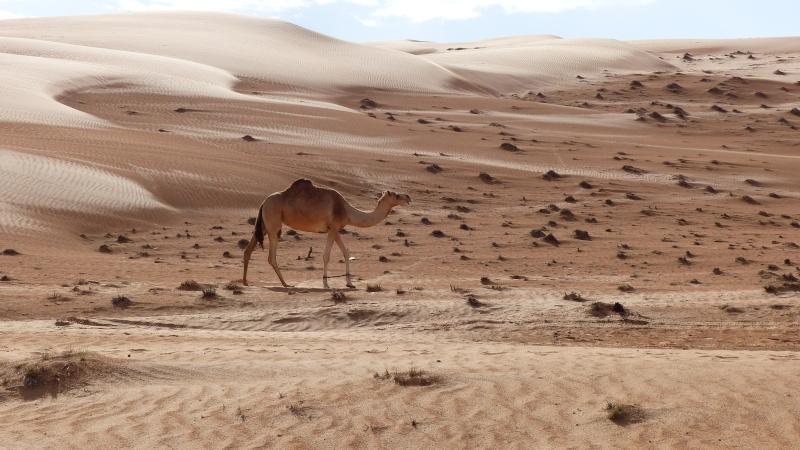 à Oman P1040311