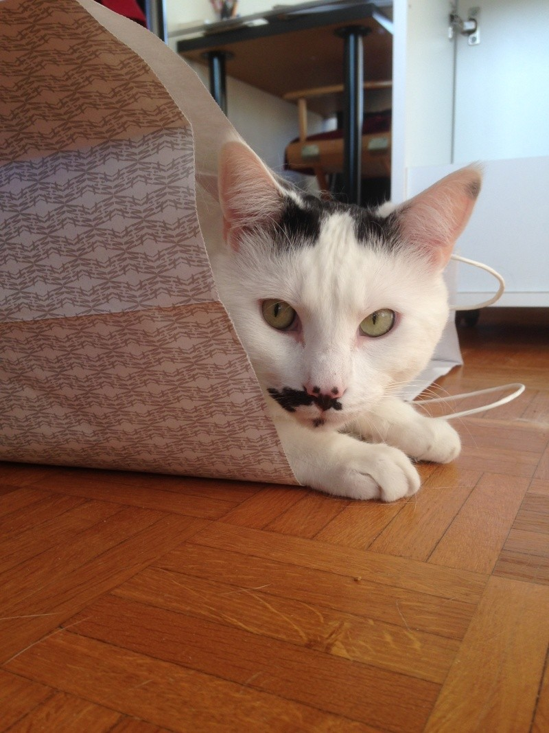 CHAT A ADOPTER : HALLY - chat mâle de 5 ans Img_2120