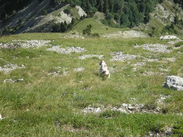 USKY,le chien d' une vie  058_210