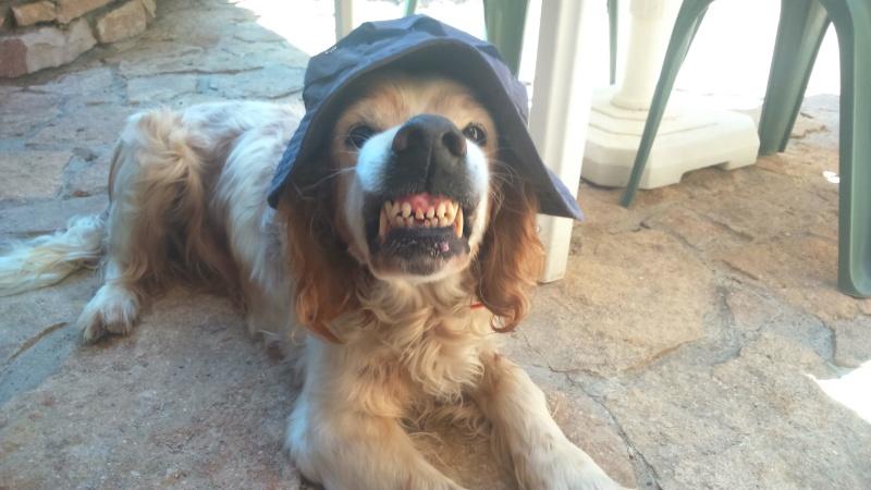 USKY,le chien d' une vie  Dsc_0310