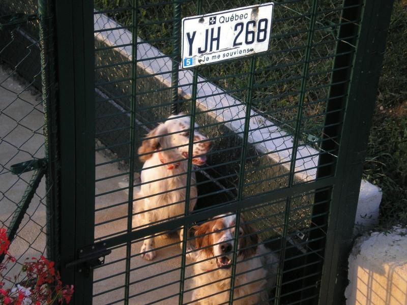 USKY,le chien d' une vie  P8030010
