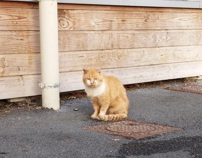 Photos des chats sauvés, avant/après - Page 8 21010