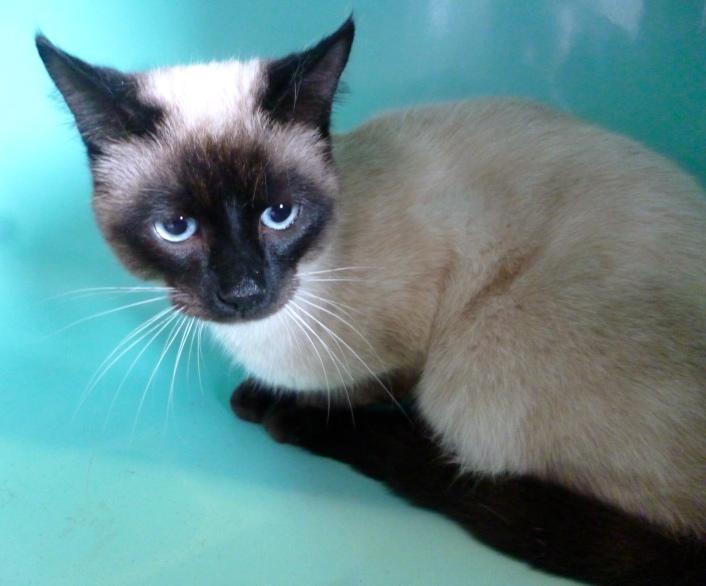 Photos des chats sauvés, avant/après - Page 9 87081013