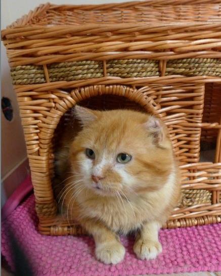 Photos des chats sauvés, avant/après - Page 8 Cooki_11