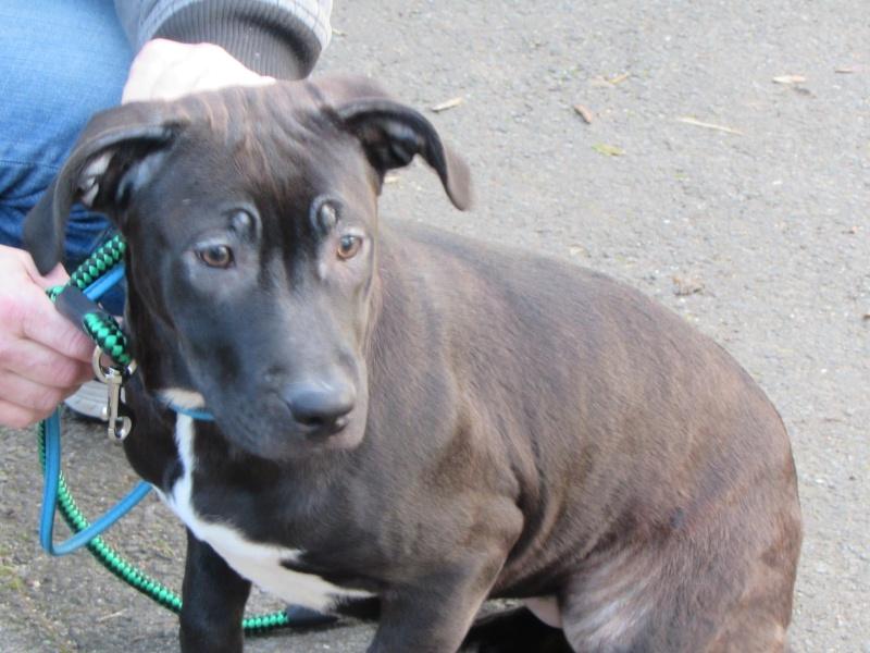 Adoption de CALINE 0241010