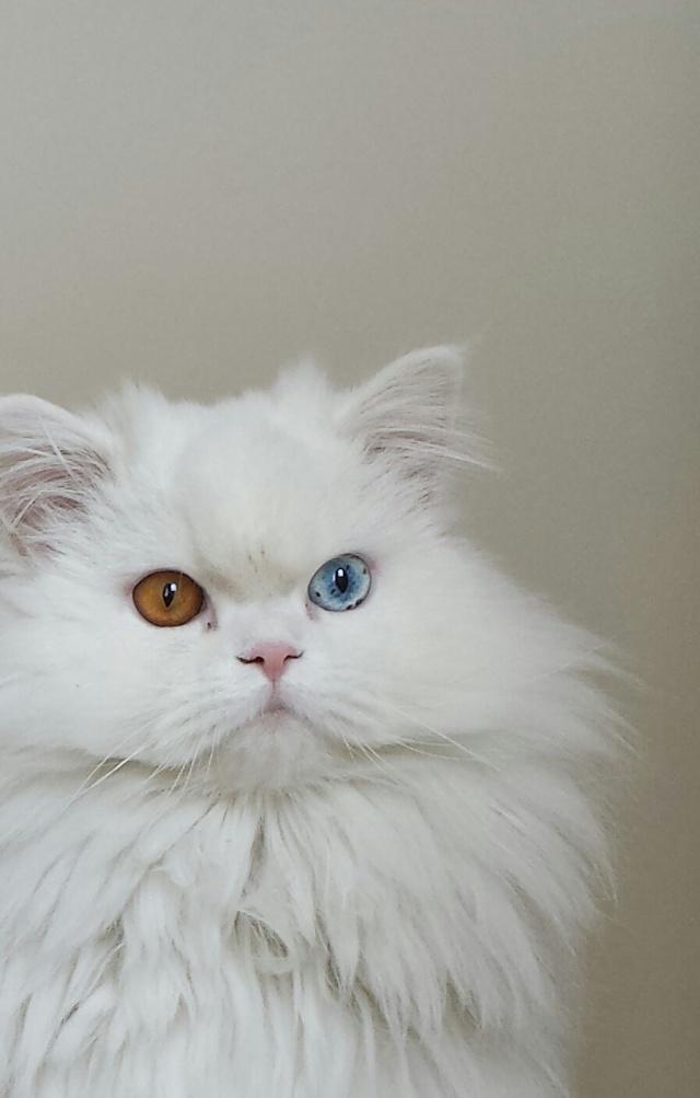 Les taches marrons sur l'oeil de chat. Casper11