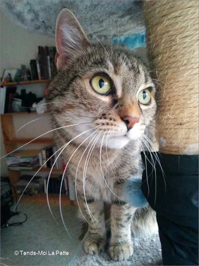 ZINA chatte tigrée de 11 ans Image111