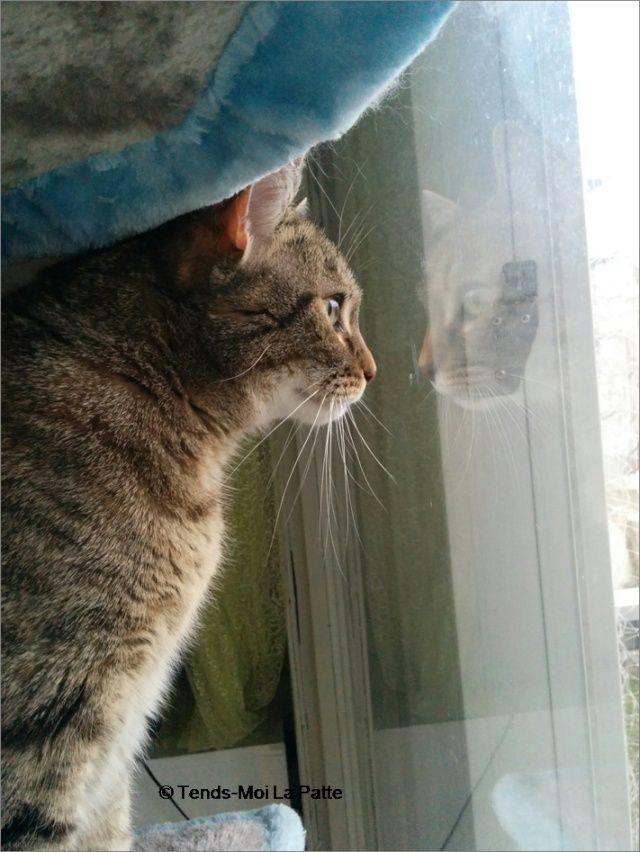 ZINA chatte tigrée de 11 ans Image112