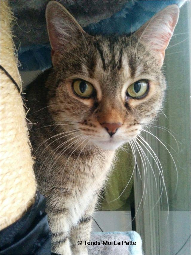 ZINA chatte tigrée de 11 ans Image114
