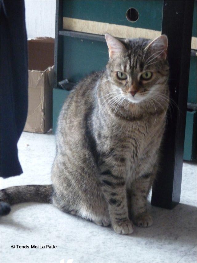 ZINA chatte tigrée de 11 ans Image119
