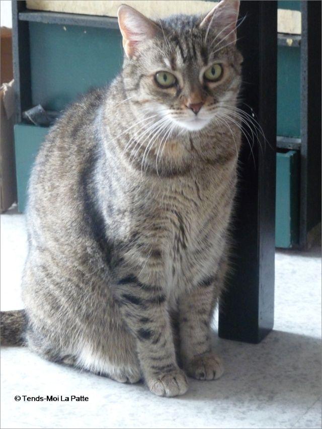 ZINA chatte tigrée de 11 ans Image120