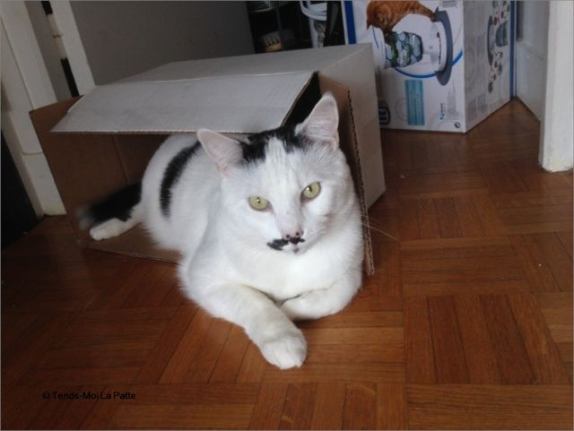 CHAT A ADOPTER : HALLY - chat mâle de 5 ans Image213