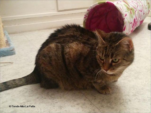 ZINA chatte tigrée de 11 ans Image410