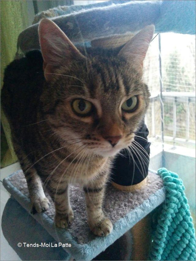 ZINA chatte tigrée de 11 ans Image610