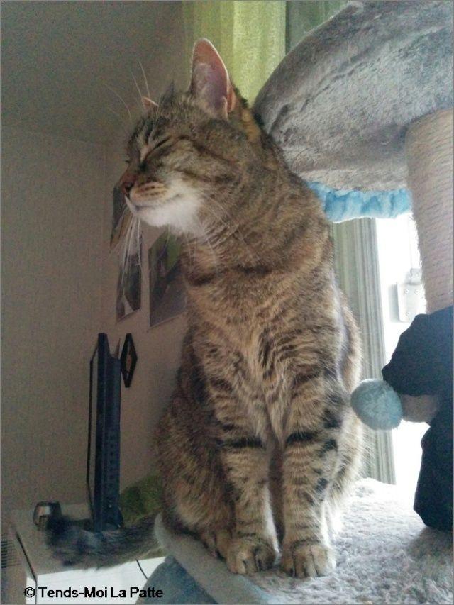 ZINA chatte tigrée de 11 ans Image710