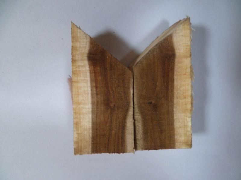 Cercis siliquastrum (Arbre de Judée) Essai_12