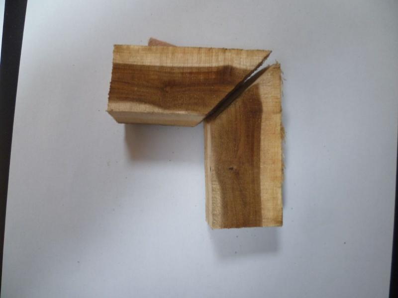 Cercis siliquastrum (Arbre de Judée) Essai_14