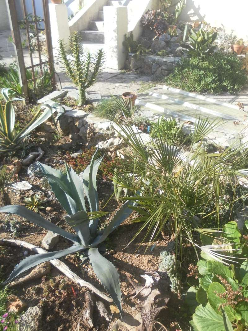 le jardin de syljou - Page 4 Sam_4812