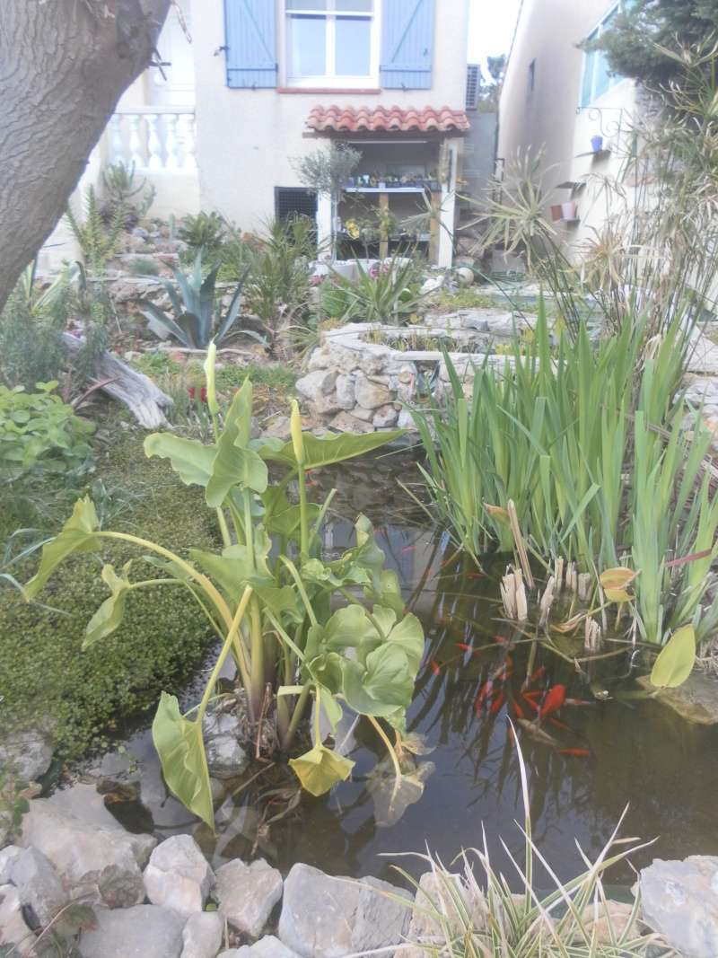 le jardin de syljou - Page 4 Sam_4825