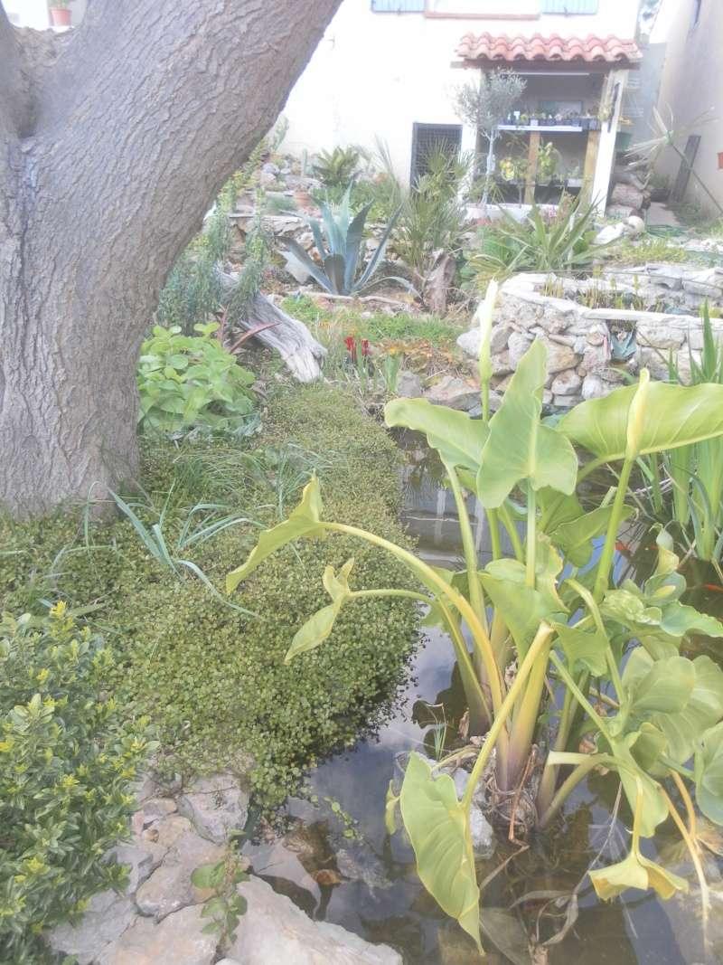le jardin de syljou - Page 4 Sam_4827