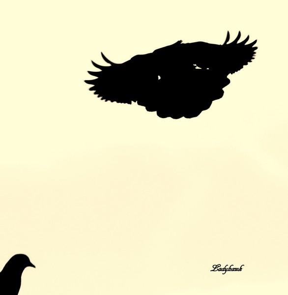 les silhouettes noires Img_9310
