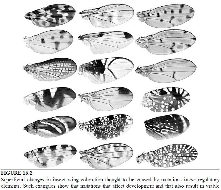 Paul Nelson, Evolution, or design ?  Sem_ty14
