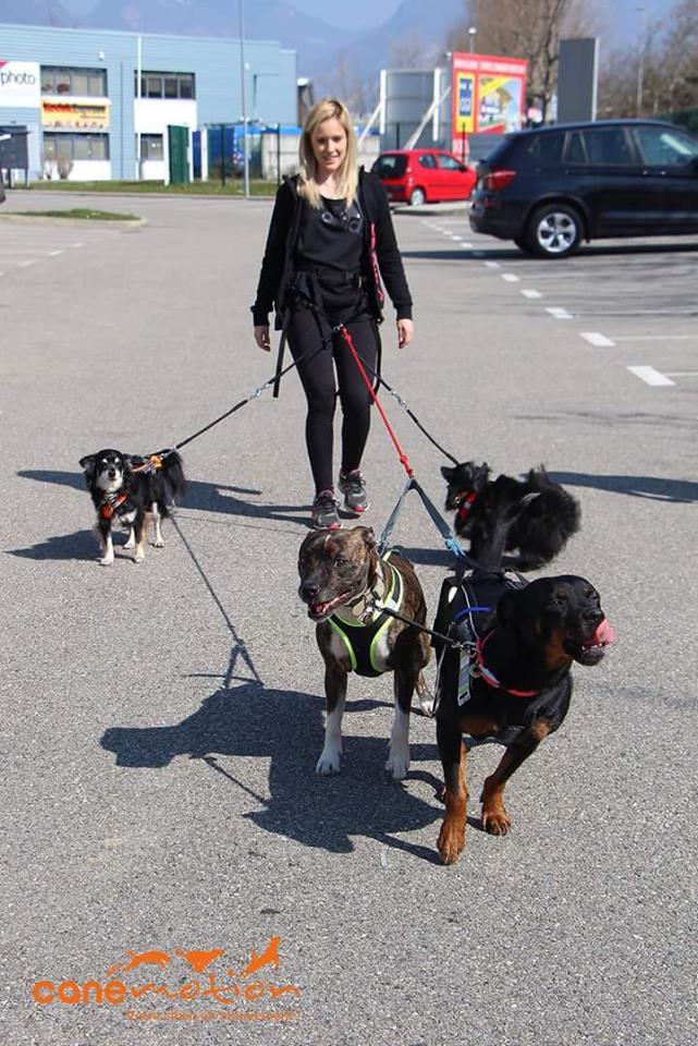 Team Ptit'LU et les sports canins : canirandonnée canicross canivtt canitrottinette 11701012