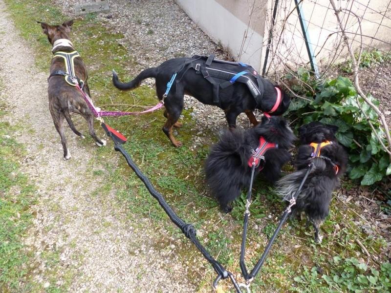 Team Ptit'LU et les sports canins : canirandonnée canicross canivtt canitrottinette 12743712
