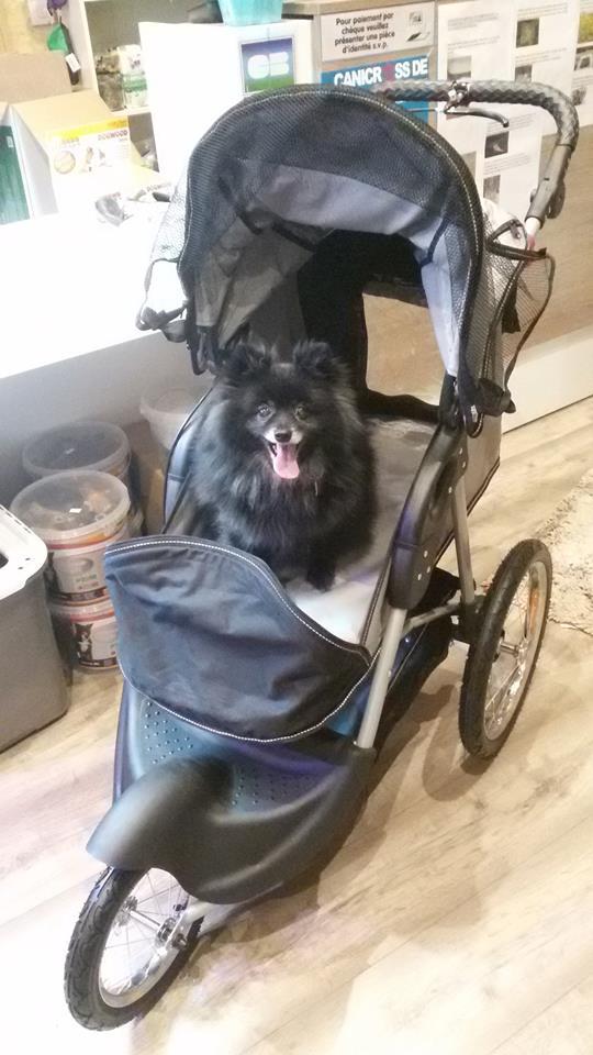 Modes de transport pour petits / vieux chiens qui fatiguent vite - Page 7 12805810