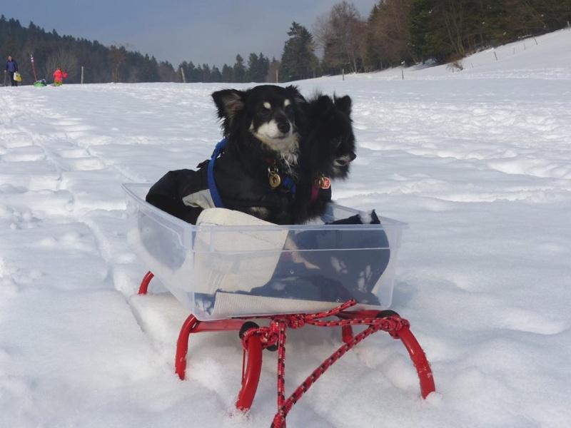 Modes de transport pour petits / vieux chiens qui fatiguent vite - Page 7 12814610