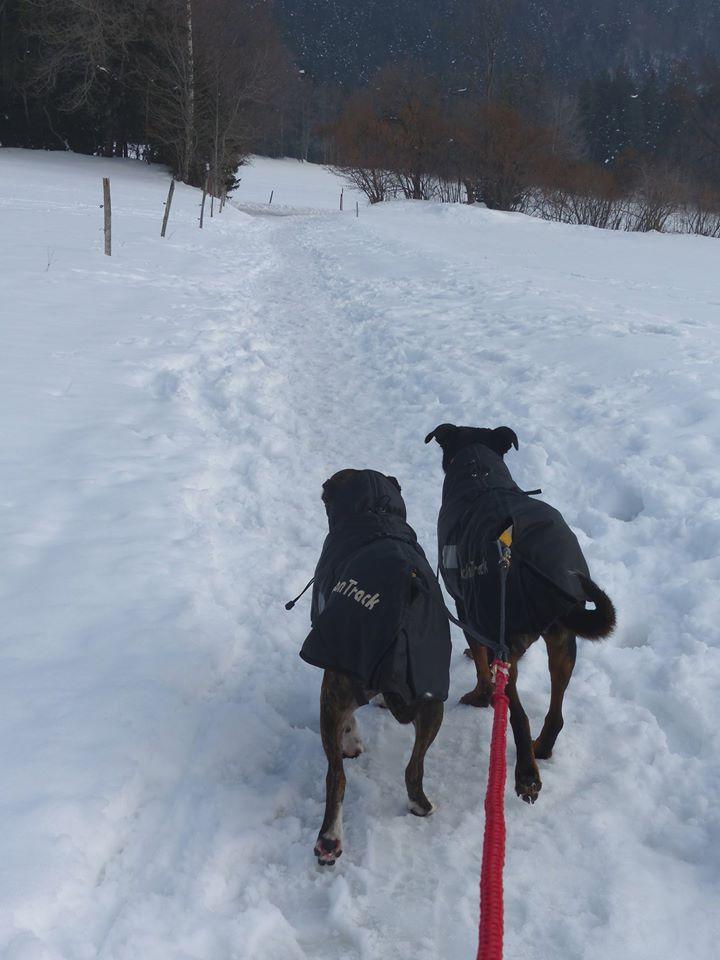 Team Ptit'LU et les sports canins : canirandonnée canicross canivtt canitrottinette 12814710