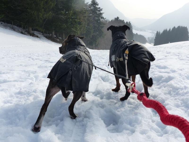 Team Ptit'LU et les sports canins : canirandonnée canicross canivtt canitrottinette 14550710