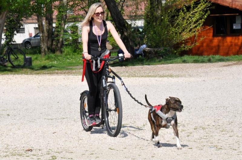 Team Ptit'LU et les sports canins : canirandonnée canicross canivtt canitrottinette 15543812