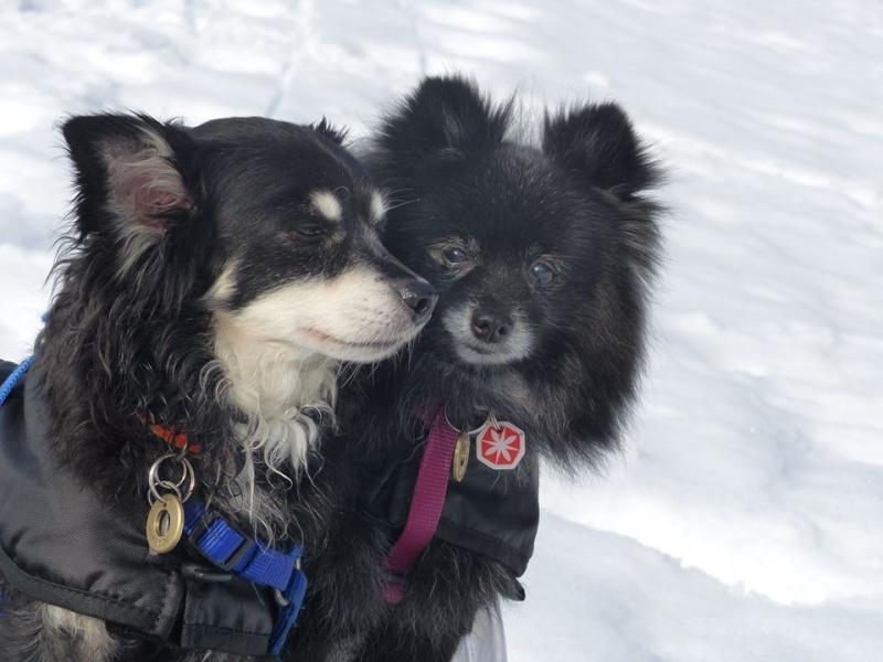 Team Ptit'LU et les sports canins : canirandonnée canicross canivtt canitrottinette 17947110