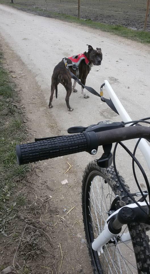 Team Ptit'LU et les sports canins : canirandonnée canicross canivtt canitrottinette 73503512
